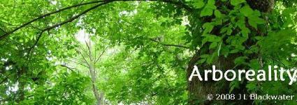 Arboreality blog