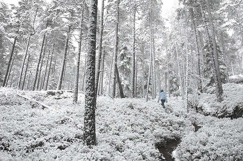 Snowy forest in Norway by Atle Brunvoll