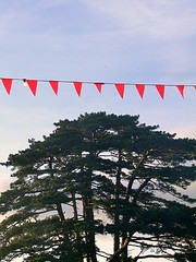 Tree @ Latitude Festival, Suffolk by Tim Parkinson