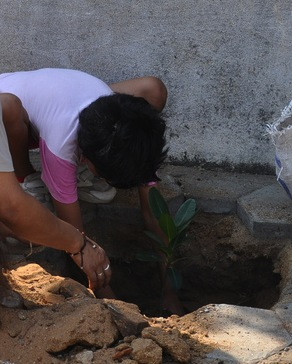 tree planting in Madras
