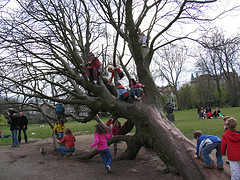 tree climbing day by Antony Antony on Flickr