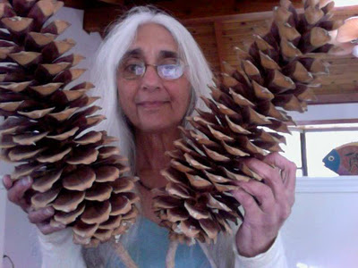 Pine cones and Robin Andrea